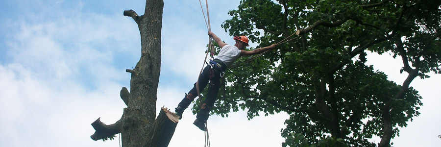 Arboriculture Lancaster | Tree Surgeon Preston | Forestry Lancashire